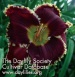 Daylily Men in Black