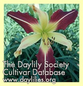 Daylily Radiation Biohazard
