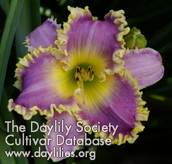 Daylily Sea Monster