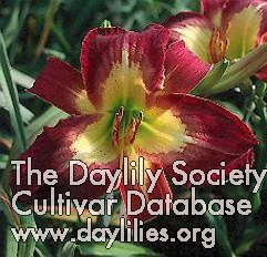 Daylily Time to Fly